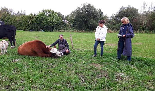 Koe Jane (van opzij) geit Thea (van achteren), koe Doortje met Bert Hollander, Annemieke Poutsma en Annemarie van Gelder