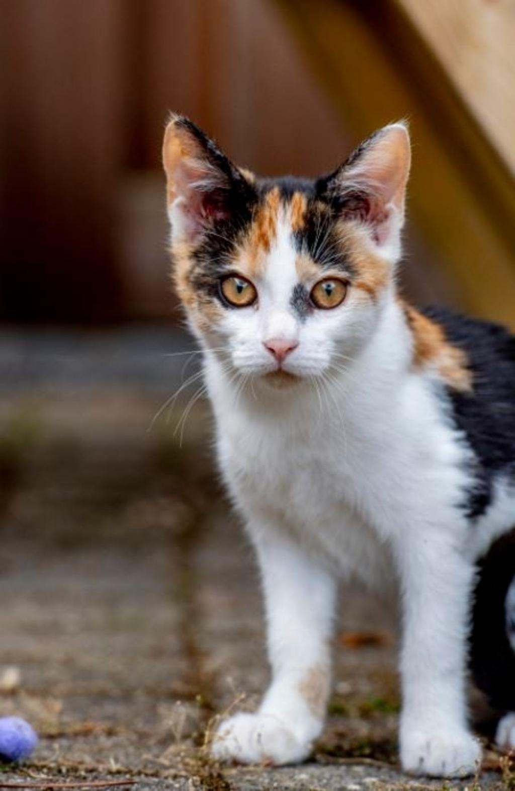 Kitty zat vastgetaped aan een hek toen ze gevonden werd  © Rondom Goeree Overflakkee