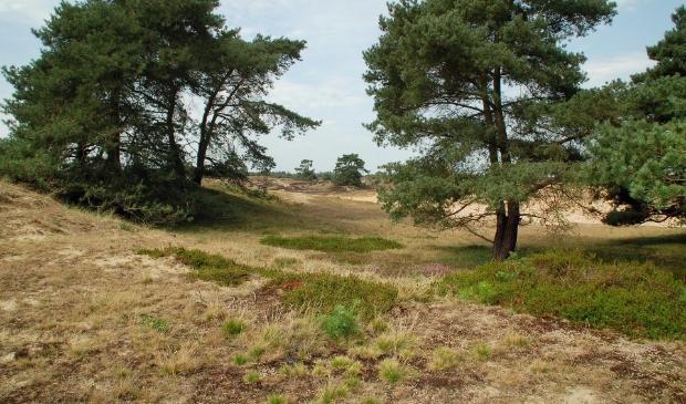<p>Een idyllisch deel van de Stellingwerven: een verrassend gebied met vele landschapsvormen.</p>