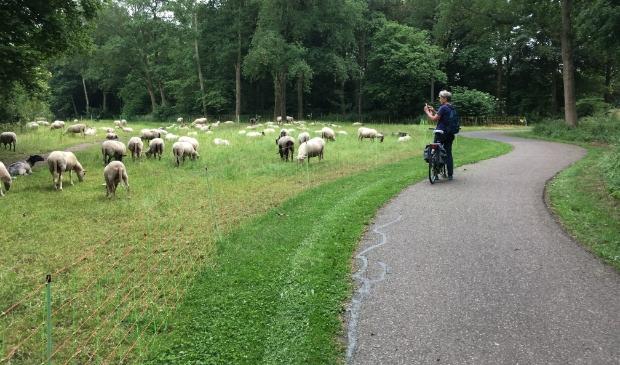 <p>Onderweg een plaatje schieten tijdens de fietsroute Heerenveen-Rottum.</p>
