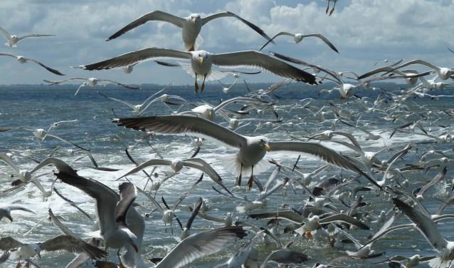 Vogels. (Foto Gosse Kruger)