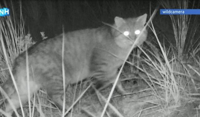 Verwilderde kat vastgelegd in 2018.