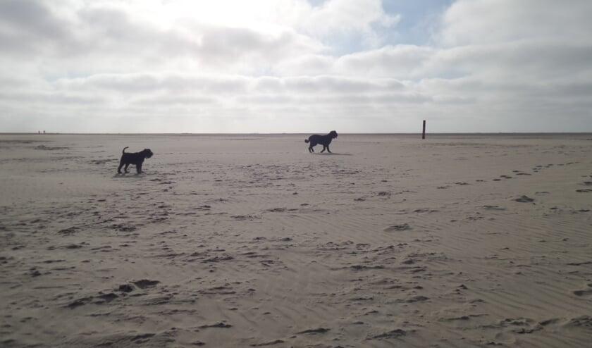 Willekeurige honden op het strand!