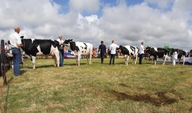 <p>Landbouwdag Texel, met onder meer de koeienkeuring, gaat ook dit jaar niet door.</p>