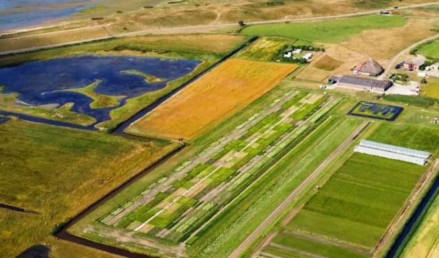 De zilte landbouw bij De Petten.
