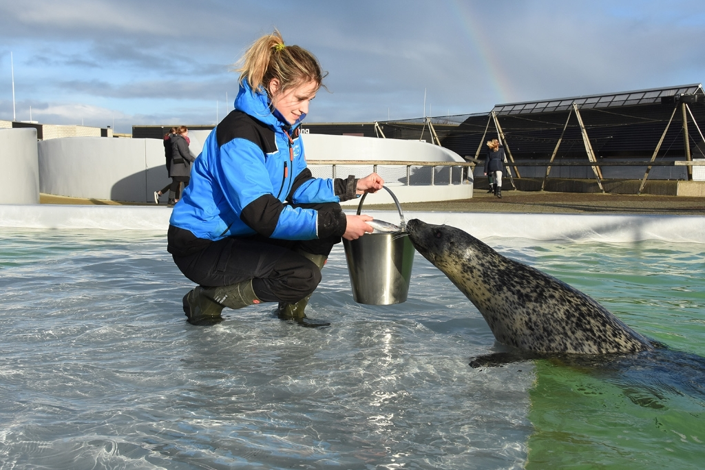 Rowanne voert zeehonden voor folder Foto: ECOMARE © Mediabureau Langeveld & De Rooy