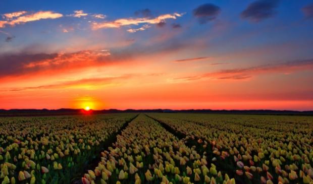 <p>Zonsondergang bij tulpenveld aan de Postweg</p>