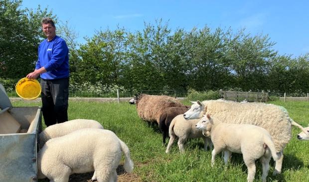 <p>Schapenhouder Carlo Veeger, bestuurslid van Vereniging Schapen Eiland Texel, voert zijn dieren.&nbsp;</p>