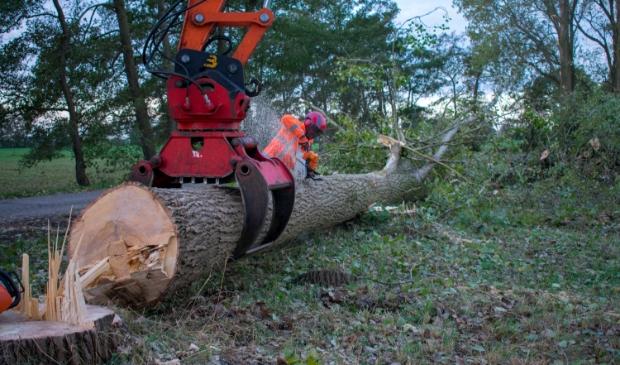 <p>Bomenkap bij Suw&acirc;ld in opdracht van gemeente Tytsjerksteradiel.<br>De gemeente Noardeast-Frysl&acirc;n kapt nu zonder bomenbeleidsplan.</p>