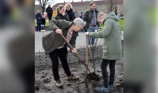 Wethouder Maria le Roy plant samen met directeur en leerlingen VSO Talryk de perenbomen.