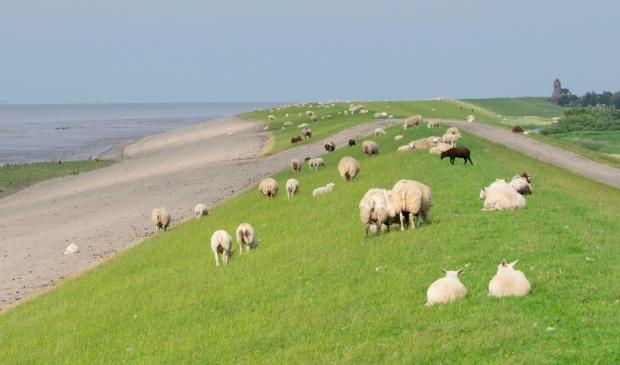 <p>De zeedijk westelijk van Ternaard.</p>