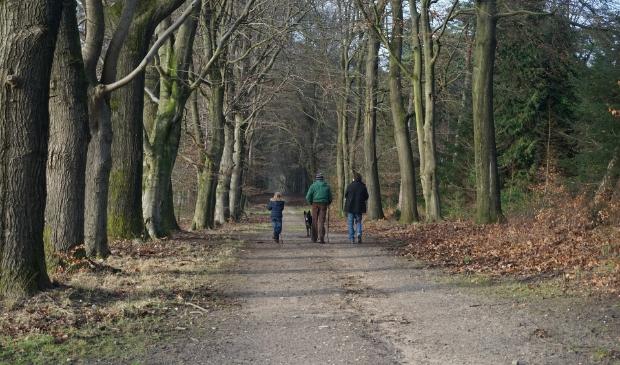 <p>Wandelen is de meest beoefende sport in Nederland.</p>