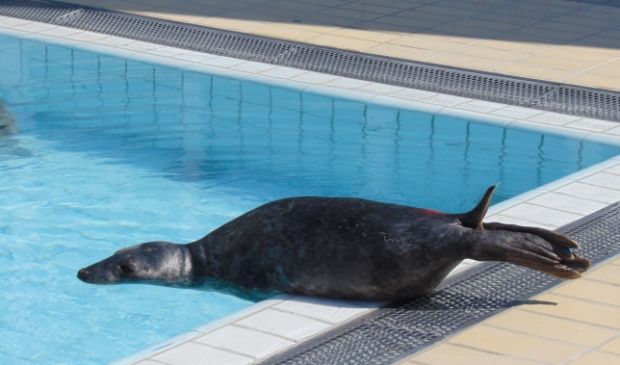 Zeehondencentrum Pieterburen hield het hoofd boven water dankzij donaties.
