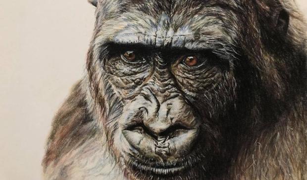 <p>Gorilla getekend door Nicole Boerema.</p>