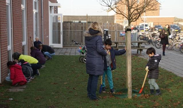 Bollen planten bij groen schoolplein