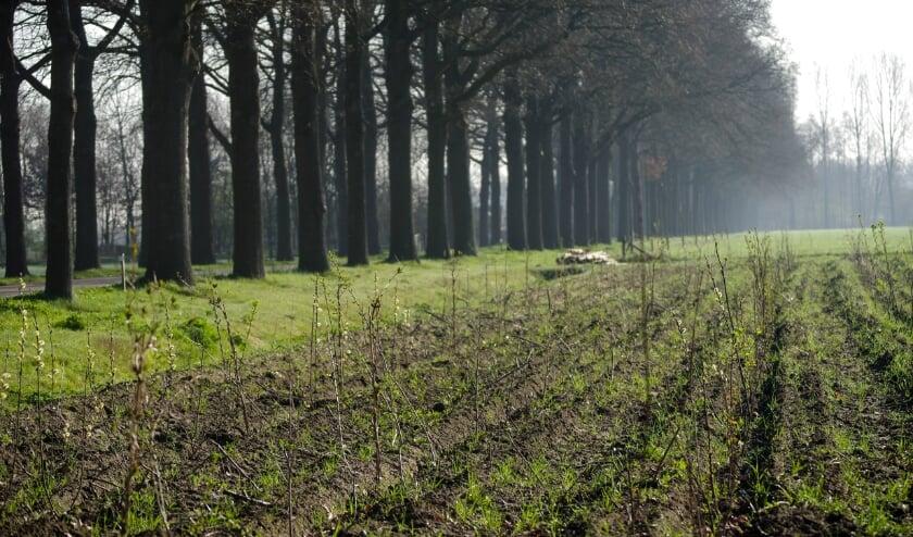 <p>In deze nieuw aangelegde houtsingel is een grote diversiteit aan (fruit)bomen en struiken gebruikt. Foto: Yvonne Buis-Franken</p>