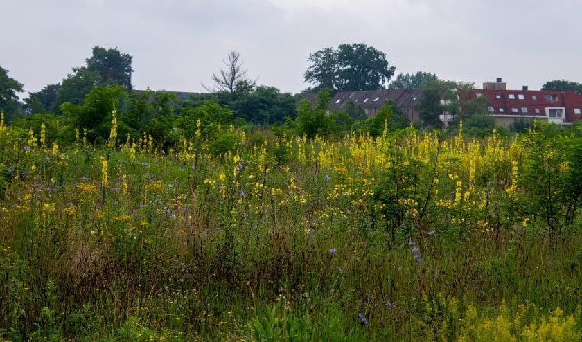 <p>Laat de natuur haar gang gaan en de bloemen komen. Foto: Peter Leunissen.</p>