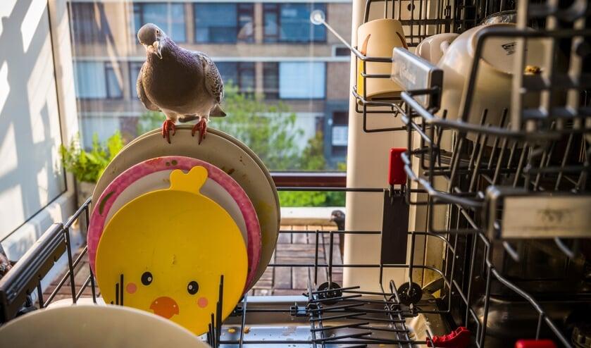 <p>Ollie strijkt neer terwijl Dolly van buitenaf toekijkt. Foto: Jasper Doest</p>