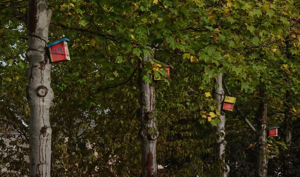 Vogelhuisjes op Ceres. (foto: Jaap Klompstra) Foto: Jaap Klompstra © Hét Gemeentenieuws