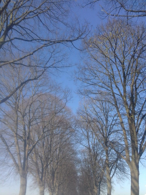 Bomenrij in november. (foto: SBPhoto)