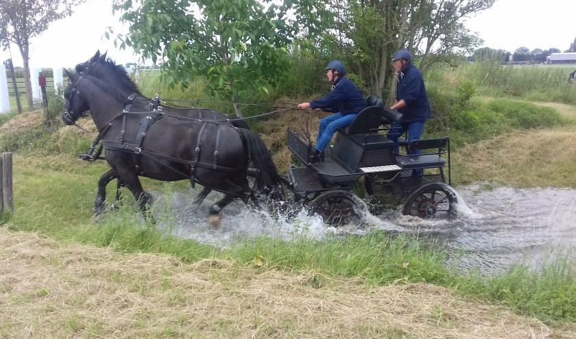 Tweespan Groninger paarden in de waterbak. (foto: Rient Ploeger)