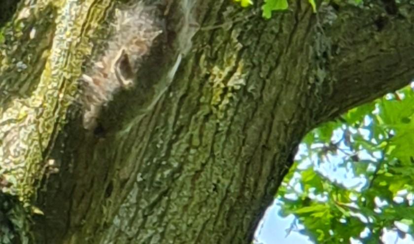 Eén van de zeven nesten. (foto: John van Wessel)