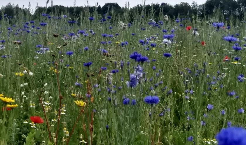 Bloemrijk grasland. (foto: Tonny Berns SLN)