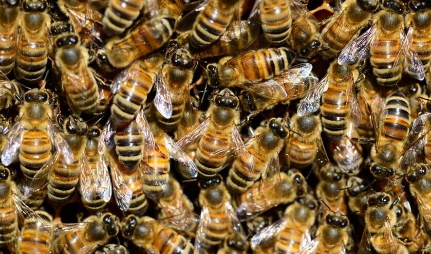 Bijen.