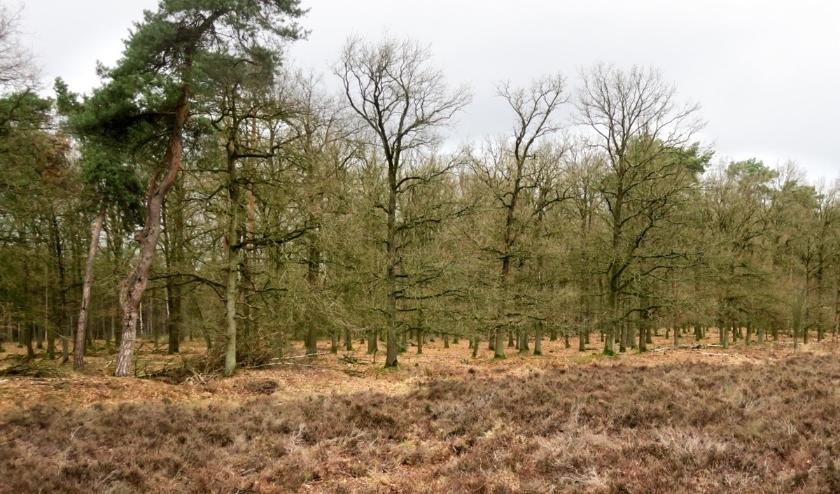 Heide en bos. (Carlo van de Weerd)