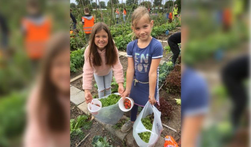 De oogst van Ilse en Mirre. (foto: Bert Janssen)
