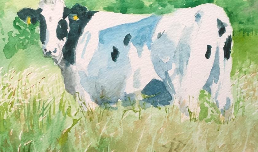 Koe in de Bemmelse waard. (foto: Leon Swinkels)