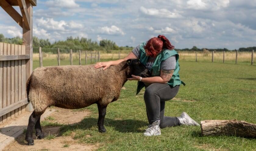 Dierverzorger aan het werk bij Landerij De Park. (foto: Reverse Pixel Photography)
