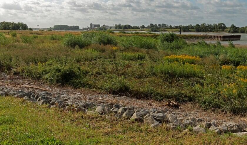 Uiterwaarden langs de Rijn bij Spijk. (foto: Luci Seegers)