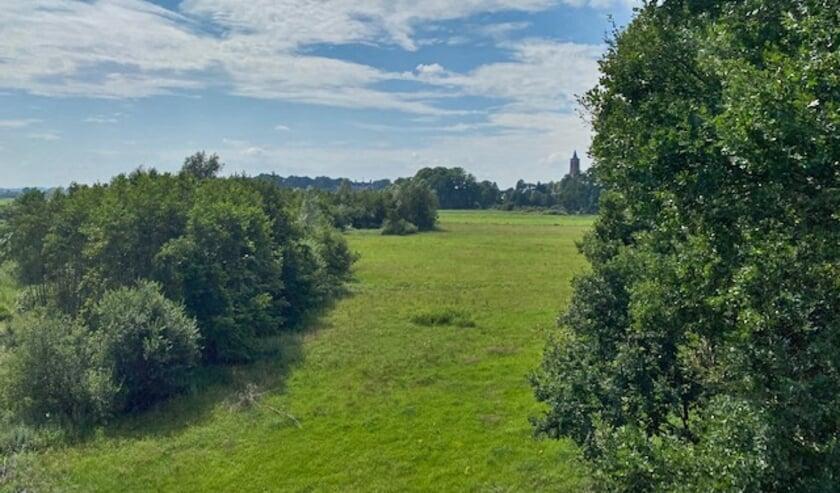 Het Amerongse Bos. (foto: Bram Blom)