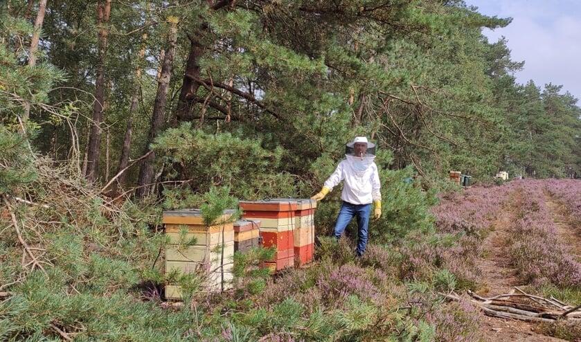 <p>Bijen kasten op de heide. (foto: Rob Moret)</p>