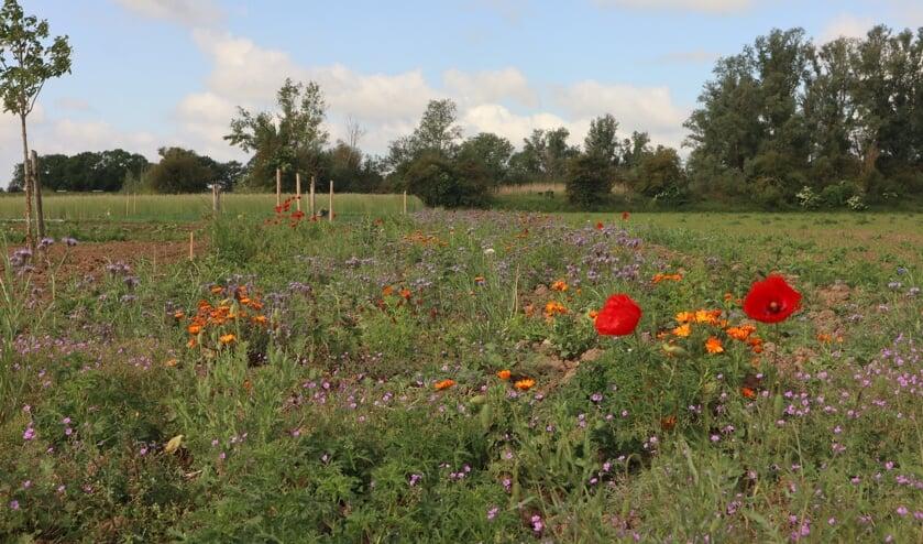 <p>Een bloemenrand speciaal voor bijen. (foto: Vivian van der Torren)</p>