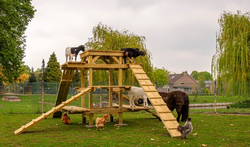 <p>Speelhout voor dieren. (foto: Herman Hendriks)</p>