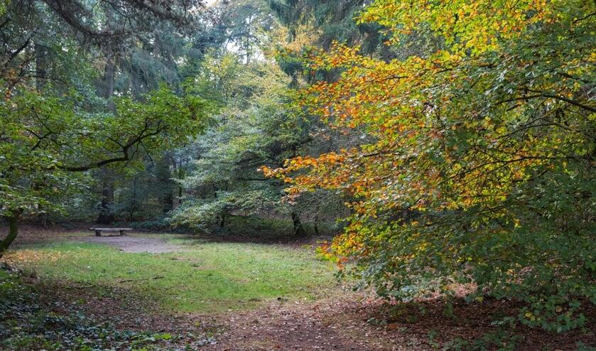 <p>Heerlijkheid Beek-Avondwandeling landgoed Beek. (foto: Ton Rothengatter)</p>