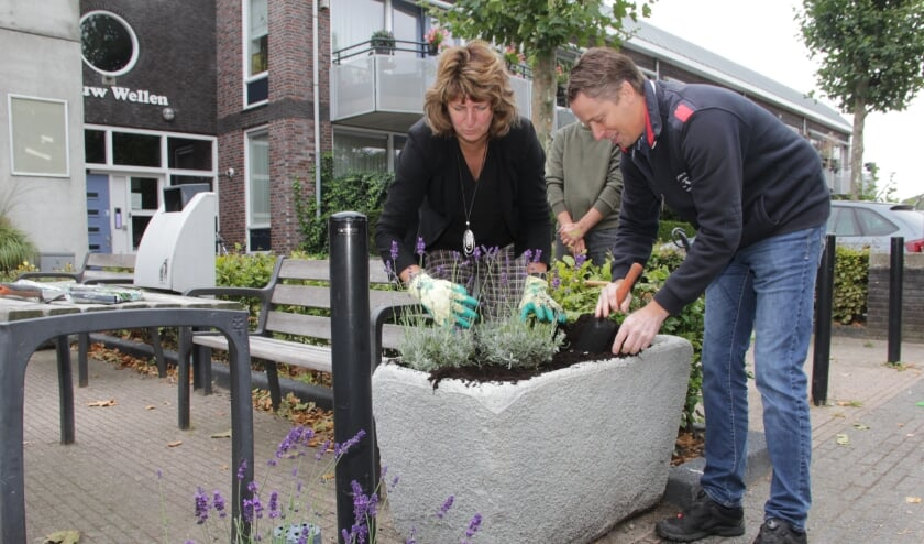 <p>Wethouder Fleuren plant lavendel in de borders in Leuth. (foto: Peter Hendriks)</p>