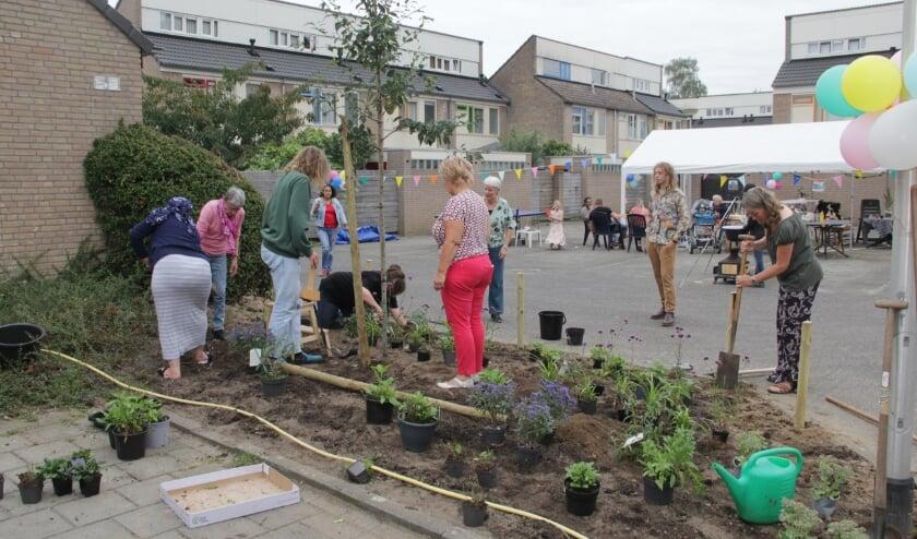 <p>Wethouder Van de Scheur helpt mee plantsoen te herplanten. (foto: Peter Hendriks)</p>